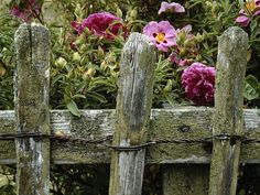 Do Fence Me In: Your Guide To Fences, Screens And Gates