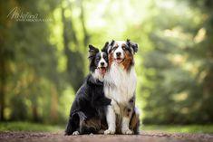 Obejmi mě Dog Photography, Dogs, Animals, Animales, Animaux, Pet Dogs, Doggies, Animal, Animais