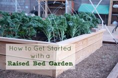 How to Get Started with Raised Bed Gardening