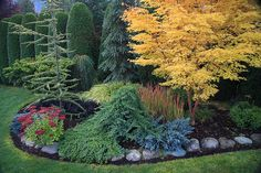 Mixed Conifer Hedge - Gorgeous!