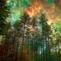 Nature PhotographyTrees Forest Woodland Starry Night by Fizzstudio, $20.00