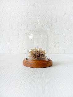 sea urchin specimen.