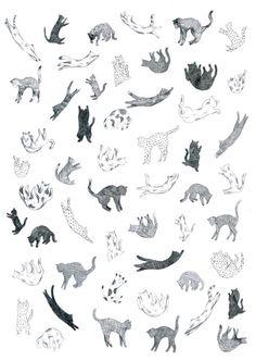 yasmine gateau: Cats fall