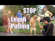How To Train your Dog NOT to PULL on the Leash! STOP CHASING or LUNGING at CARS on a Walk! - YouTube