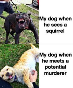 Safe from all small mammals tho Funny Animal Jokes, Crazy Funny Memes, Really Funny Memes, Stupid Funny Memes, Cute Funny Animals, Funny Relatable Memes, Haha Funny, Funny Dogs, Funny Stuff