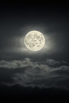 wavemotions:  Moon by Bessi