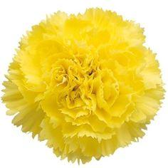 Carnations Yellow Fancy