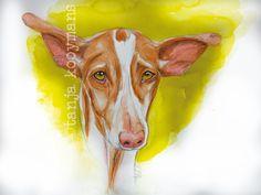Ibizan Hound / Podenco Ibicenco / Podenco art dogart by Tanja Kooymans
