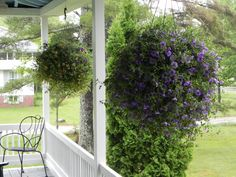 Front Porch hanging plants | Hanging Plants from Walker Farms in Dummerston, VT