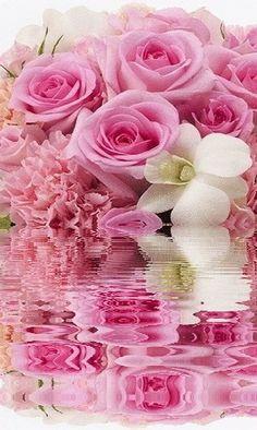 Organic Gardening Research Beautiful Flowers Pictures, Beautiful Rose Flowers, Flower Pictures, Nature Pictures, Flowers Gif, Water Flowers, Flowers Nature, Bisous Gif, Jesus E Maria