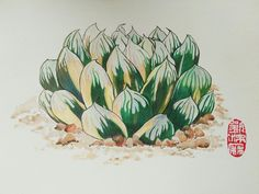 Haworthia obtusa variegated  by Kimberly low