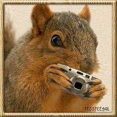 Oravan kuvia | Animaatiokuvia oravat - orava