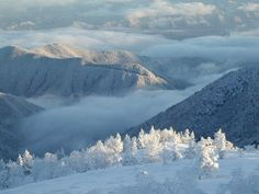 Rime Winter In Japan, Mountains, World, Nature, Travel, Outdoor, Frost, Winter, Outdoors