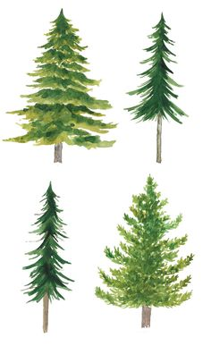 Watercolor Clipart Spruce Pine Conifer trees Forest by ReachDreams Watercolor Clipart, Watercolor Trees, Easy Watercolor, Watercolor Landscape, Watercolour Painting, Painting & Drawing, Landscape Paintings, Watercolor Portraits, Bird Paintings
