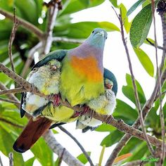 Happy Mother's Day to all the mama birds out there from Walter and the BIRD E-JUICE crew