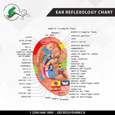 Ear Reflexology Chart For Thes Magethe Geckomagesupplies Mageproducts
