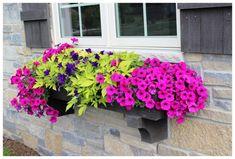 colorful full sun planters - Google Search