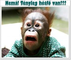 Hilarious pic with joke quote. For the best humor and short funny jokes visit… Funny Animal Faces, Funny Animal Pictures, Funny Images, Funny Animals, Bing Images, Funny Pics, Baby Animals, Face Pictures, Funny Stuff