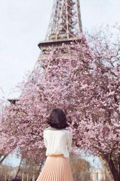 Cherry Blossom Season   Paris