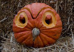 Google Image Result for http://arboretum.psu.edu/images/pumpkin%2520festival%2520med%2520owl%2520TINA%2520HAY.jpg