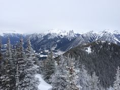 Sulphur Mountain, Banff AB Banff Ab, Sulphur Mountain, Places Ive Been, Mountains, Nature, Travel, Outdoor, Voyage, Outdoors