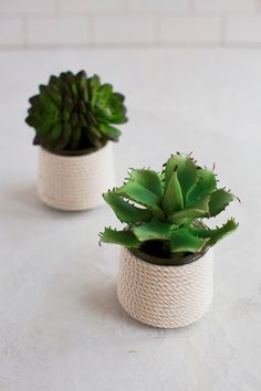 5 Easy DIY Glass Planters – A Beautiful Mess - using yoplait oui yogurt containers Crafts With Glass Jars, Mason Jar Crafts, Mason Jars, Sisal, Small Glass Containers, Yogurt, Pots, Plant Projects, Diy Projects