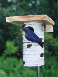 Eastern bluebird favorite-The Gilbertson Nest Box is also approved by the North American Bluebird Society. Preferred by blues over the years, this house mounts quickly and easily on 1/2-inch conduit.
