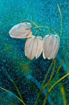 maya47000:  Spring rain by Magda Wasiczek