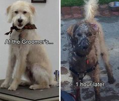Funny Animal Pictures Of The Day – 41 Pics