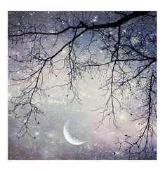 """""""Hanging tree above the night sky, and a crescent moon! Amazing. I live with this everyday. And I will never get bored of it."""" ~ Nightsky"""