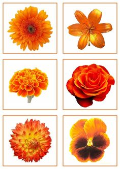 Color Games, Color Activities, Clip Art, Play, Education, Nice, Montessori Color, Learn Math, Orange Color