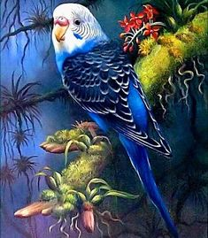 parakeet in tropical setting Exotic Birds, Colorful Birds, Bird Drawings, Animal Drawings, Pretty Birds, Beautiful Birds, Beautiful Images, Budgies, Parrots