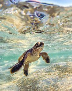 Australien on - Meerestiere Baby Animals Super Cute, Cute Little Animals, Cute Funny Animals, Tier Wallpaper, Animal Wallpaper, Room Wallpaper, Sea Turtle Wallpaper, Beach Wallpaper, Travel Wallpaper