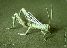 grasshopper / lacusta - cosas