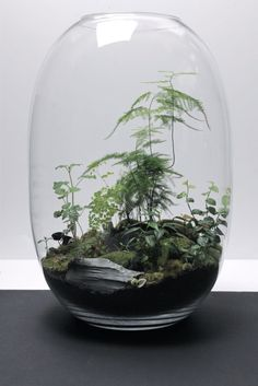 Today we look at ways to make your very own unforgettable bonsai terrarium plants. The picture Bonsai Terrarium plant here offers you a sense of the scale, and we're sure you want to have it for your home decor. Air Plants, Garden Plants, Indoor Plants, Succulents Garden, Cactus Plants, Decoration Plante, Succulent Terrarium, Terrarium Table, Glass Terrarium Ideas