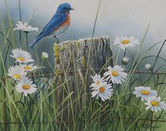 Summer Meadow - Bluebird by Susan Bourdet  (Click to close)