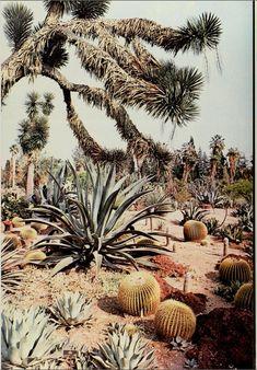 california, a picture book, 1978