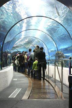 L'Aquàrium, Barcelona, Spain