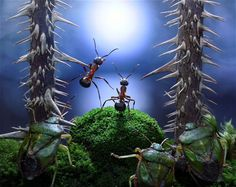 The fantasy world of ants: photographs by Andrey Pavlov - Telegraph