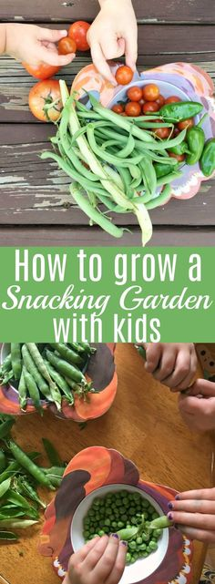 A snacking garden is a great way to teach children about growing and loving vegetables, fruits and herbs. Gardening with children teaches them responsibility, life skills, and a love for vegetables early on! Organic Vegetables, Fruits And Vegetables, Veggies, Growing Tomatoes In Containers, Growing Vegetables, Grow Tomatoes, Cherry Tomatoes, Garden Crafts For Kids, Garden Ideas
