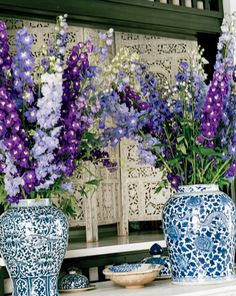 Delphiniums in Blue