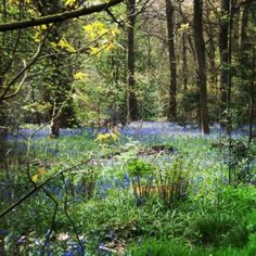 Ecclesall Wood in Sheffield