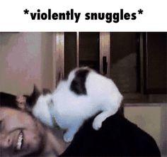 So much snuggles GIF