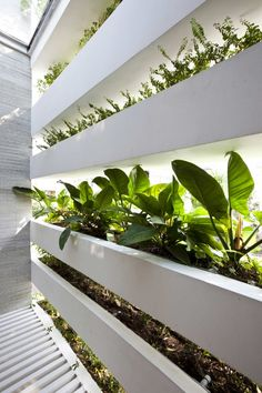 Natural Vertical Garden Growing Nice between Striped Planters to Enhance Stack Green House Staircase and Room