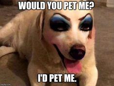 animal meme Funny Animal Memes Of The Day 28 Pics Lustige Tier Meme Des Tages 28 Bilder Funny Animal Memes, Cute Funny Animals, Funny Animal Pictures, Funny Cute, Haha Funny, Funny Dogs, Funny Memes, Lol, Hilarious Pictures