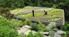 suculent gardens examples | Mill Valley Cabins – Succulent Sedum Roof Gardens