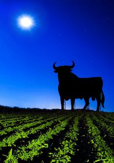 The famous Bull on the hill. and wine in bottles! Menorca, Spain Places To Visit, Ibiza, Navy Day, Cadiz, Spain And Portugal, How To Speak Spanish, Horse Breeds, Spain Travel