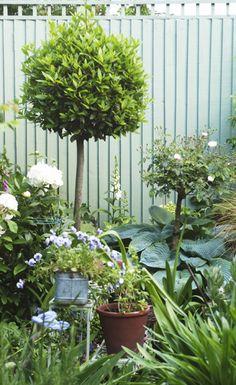 vanessa's garden; Jane Cumberbatch