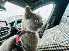 大晦日、名古屋は雪がパラパラしてきたので、大急ぎでUSAとお買い物へいきました。 USA:ここ、安全? It's safe in here, right? Gifu, Cats, Animals, Gatos, Animales, Animaux, Animal, Cat, Animais