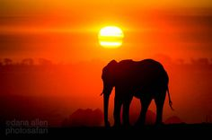 Water of Life… by Dana Allen~ a young elephant waits for his turn at a crowded waterhole in Hwange National Park